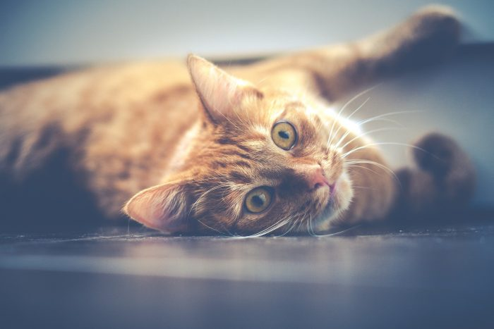 Who Knew That Cats Are Their Protectors >> Cats Spirituality Ameliabert Com