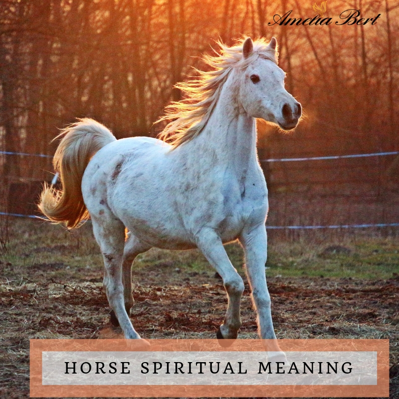 Horse: Spiritual meaning