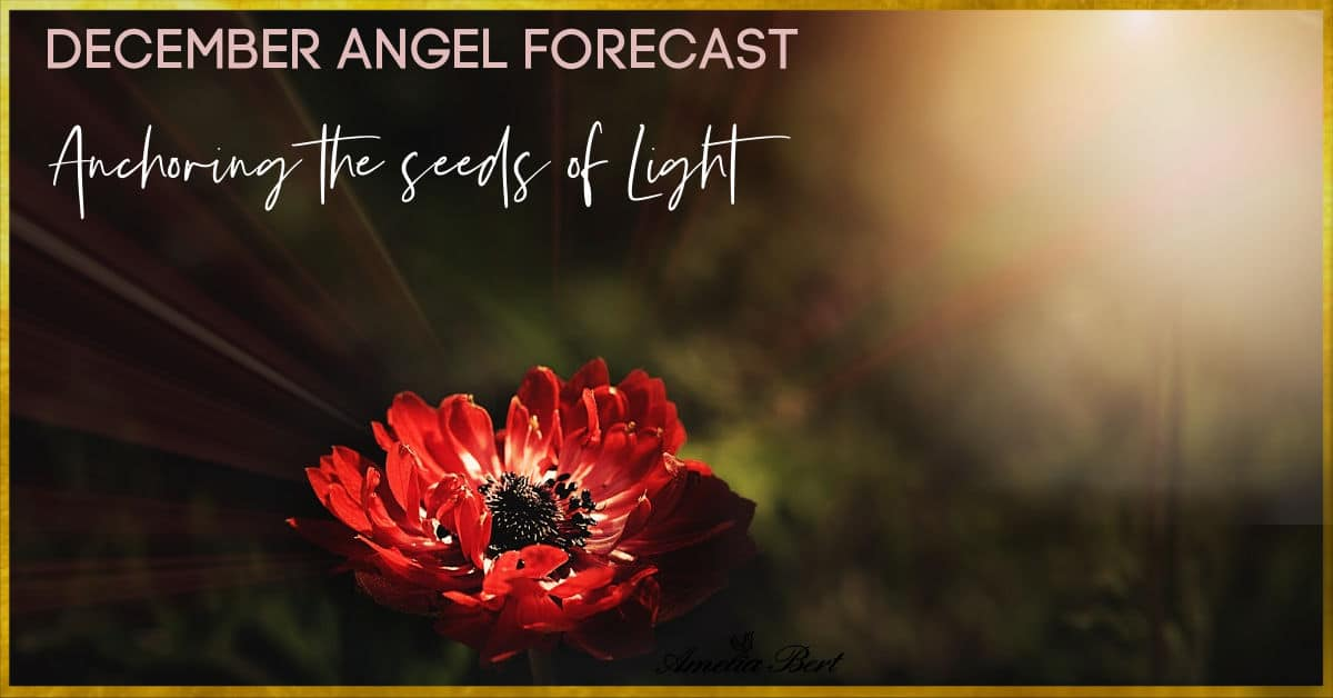 Anchoring the seeds of light – December angel forecast